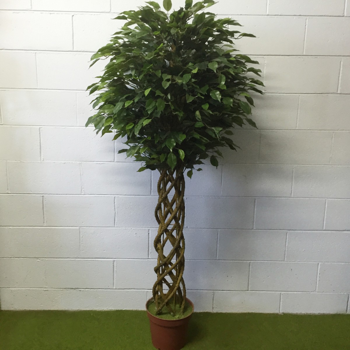 Braided Ficus Tree Artificial Trees And Flowers