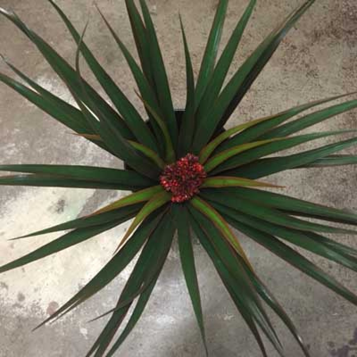 Yucca Plant Artificial Trees And Flowers Wholesale