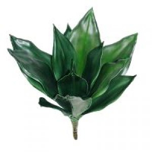 Large Agave