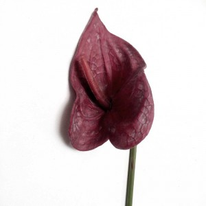 Rubber Anthurium Lily