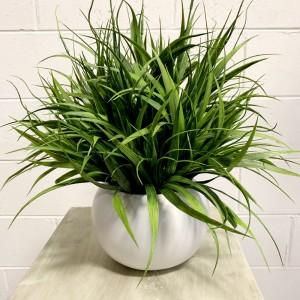 Mondo Grass Arrangement