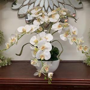Phalaenopsis Arrangement