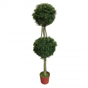 Double Boxwood Topiary