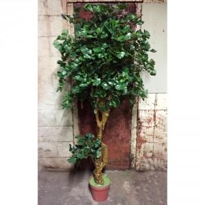 Jingo Tree