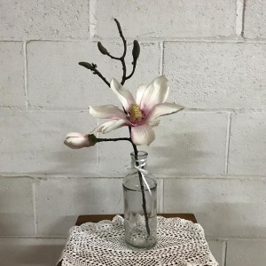 Bottle Magnolia