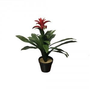 Star Plant Bush