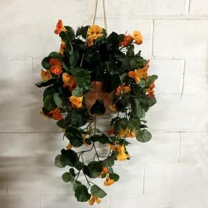 Nasturtium Hanging Basket