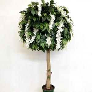 Ficus Wisteria