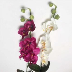 Oak Orchid