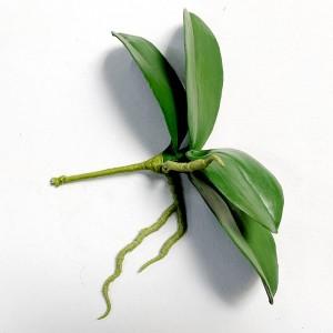 Phalaenopsis Leaf