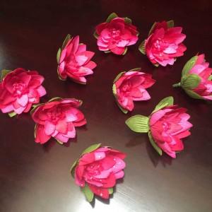 Water Lily Flower Head