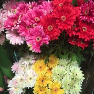 Gerbera Water Flowers