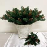 Pine Bunch